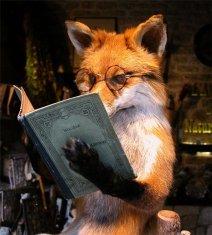 studying-fox